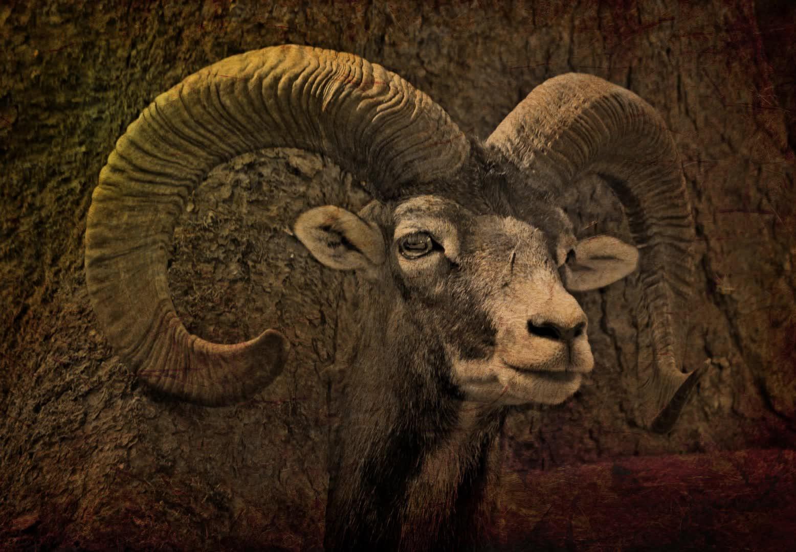 03.2-Hexenmedizin - Der Bock, der göttliche Spender